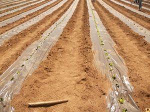 azienda agraria di Soveria Mannelli (3)