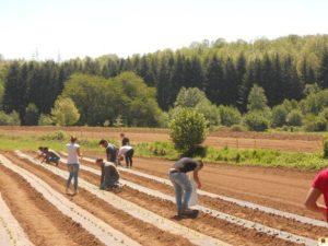 azienda agraria di Soveria Mannelli (4)